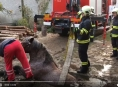 VIDEO:Hasiči na Litovelsku zachraňovali koně