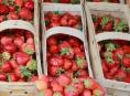 Kontrola stánkového prodeje jahod nepřinesla nic pozitivního