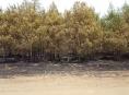 Lesníci varují před kouřením v lese