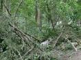 Kalamita v lesích je zatím vyčíslena na 25 milionů