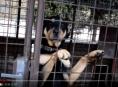 Veřejnost na Šumpersku může naplnit psí misky v útulcích