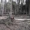 les postižený silným větrem u Chroustníkova Hradiště v Královéhradeckém kraji    zdroj foto: Lesy ČR