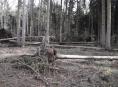 Silný vítr poškodil podle prvních odhadů asi milion stromů ve státních lesích