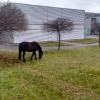 Šumperk - odchyt koně                      zdroj foto: HZS Olk