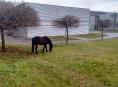 Po Šumperku pobíhal kůň bez jezdce