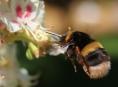 Zemědělci najdou rozmístění včelích úlů i na internetu