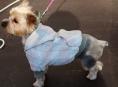 FOTO: Jaká byla první módní psí přehlídka v Šumperku