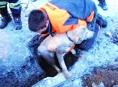 Labradora ve Svojanově zachránili hasiči z kanálu
