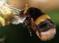 Olomoucký kraj podpoří začínající včelaře