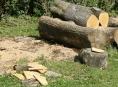 Šumperské květnové dřevosochání. Tvořit se budou pohádkové postavy