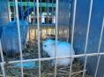 Výstavu drobného zvířectva v Rapotíně si nenechaly ujít stovky návštěvníků