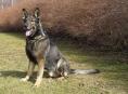 Policejní pes hledal v olomoucké škole bombu