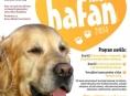 Šumperské modelky podpoří přehlídku psích manekýnů a manekýnek