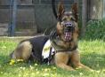 Policejní pes Orin dopadl bytové zloděje