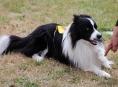"""""""Nebojím se nudy,"""" říká majitelka psa, který počítá"""