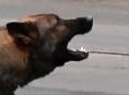 Muž na Jesenicku zastřelil útočícího psa
