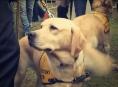 Majitelé canisterapeutických psů v Šumperku jsou osvobozeni od poplatků
