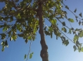 Na Litovelsku si děti vysadily stromořadí