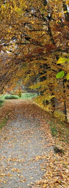 kouty podzim park