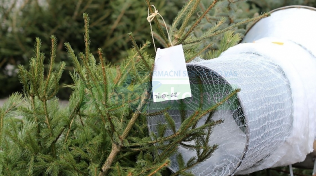 """Adventní nabídka: """"Vánoční stromky dětem zdarma"""""""