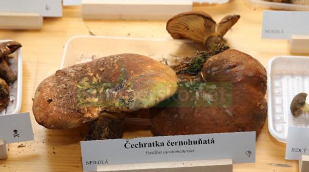 Šumperské muzeum připravuje tradiční výstavu hub