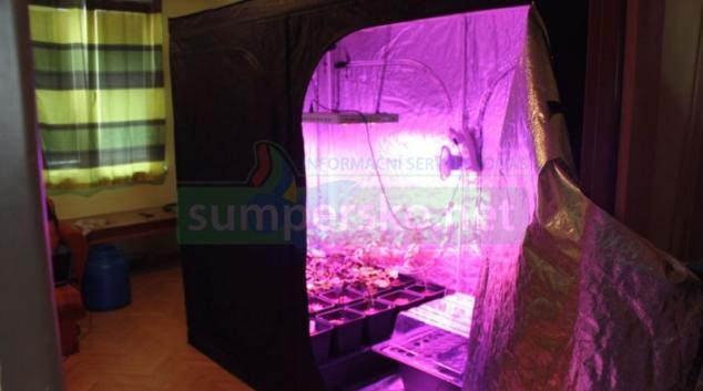 FOTO. Obývací pokoj si muž v Šumperku přetvořil na indoorovou pěstírnu