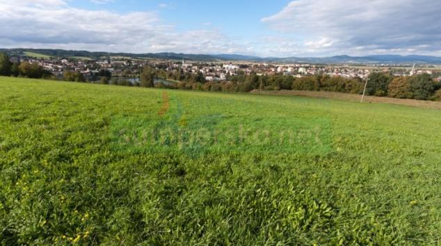 Výsadby stromů v Zábřehu připomenou výročí republiky