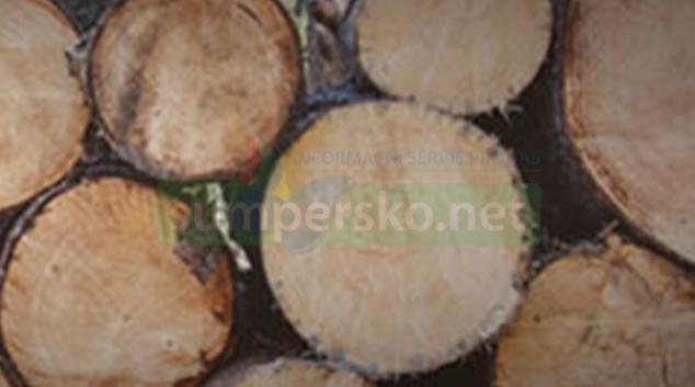 Lesy ČR prodávají dříví veřejnosti