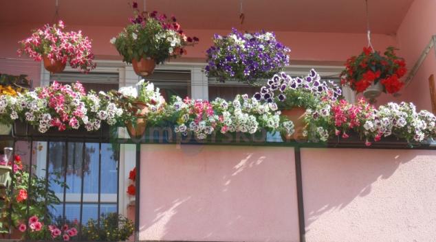 Zábřeh ocení rozkvetlá okna, balkony i předzahrádky