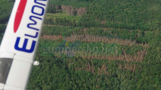 Lesy z ptačí perspektivy