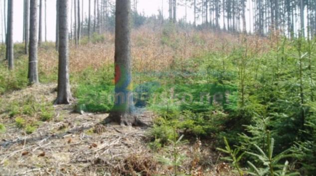 Největší obnova lesů v historii začíná