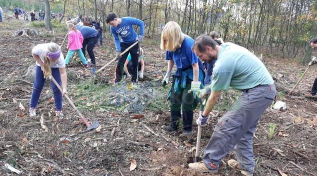 Den za obnovu lesa spojil 31 tisíc lidí
