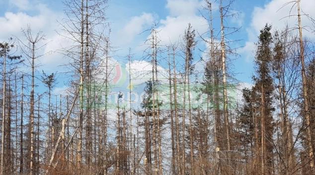 Pomoc pro vlastníky lesů postižených kůrovcovou kalamitu