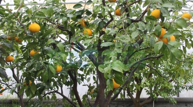 Vůně citrusů a záplava květů exotických rostlin