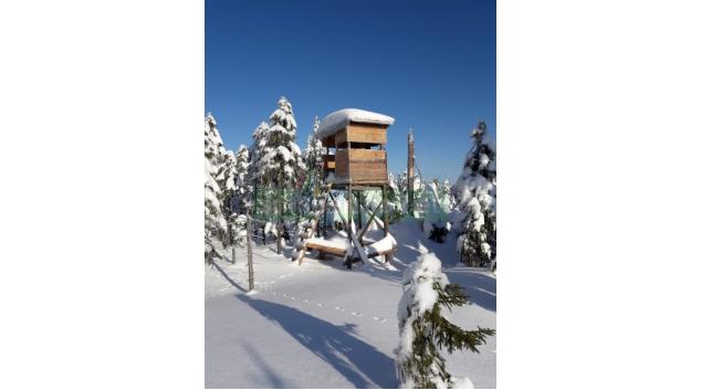 Lesy České republiky pronajmou 48 honiteb