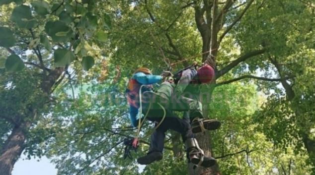 Evakuace paraglidisty ze stromu na Šumpersku
