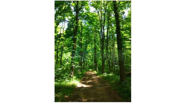 Velký Den za obnovu lesa se nekoná
