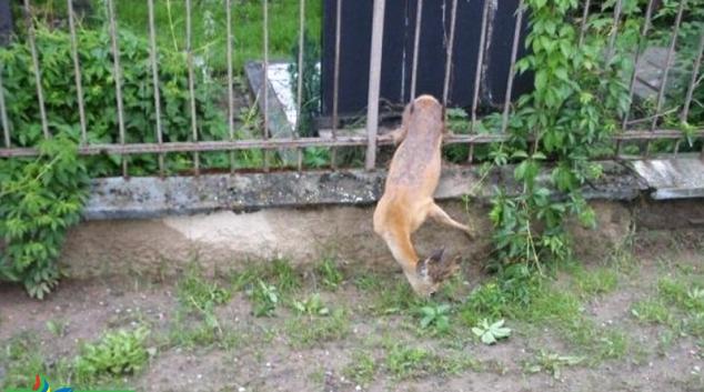 Srnkám se zalíbilo v Olomouci na hřbitově