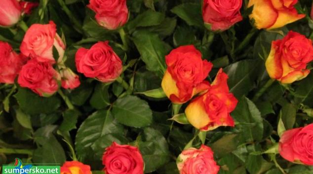 Květiny pro Adinu Mandlovou