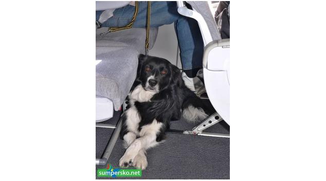 Asistenční pes pomáhá kardiačce a bourá bariéry mezi lidmi