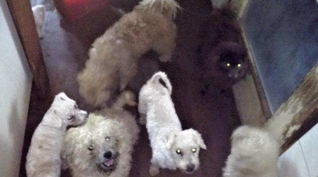 Veterinárně správě se podařilo odhalit množírnu psů v Praze