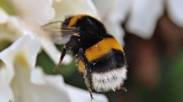 V Šumperku vzniknou dva včelařské kroužky