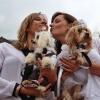 Šumperský hafan 2014  zaznamenal i psí svatbu                                  zdroj foto: archiv sumpersko.net