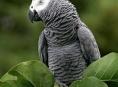 Záchrana papouška Žako v Drozdově