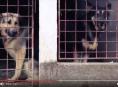 Na Šumpersku opět můžete pomoci naplnit psí misky v útulcích