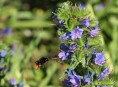 Hejtmanství poskytne dotace začínajícím včelařům