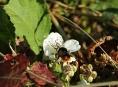 Hejtmanství rozdělí více dotací mezi začínající včelaře