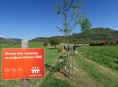 Obce mohou získat 150 tisíc korun na výsadbu nové aleje