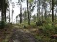 """Lesníci varují: """"Neriskujte, v lesích není bezpečno!"""""""