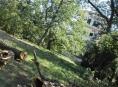 Přestárlé duby u Rendez-vous ohrožovaly návštěvníky